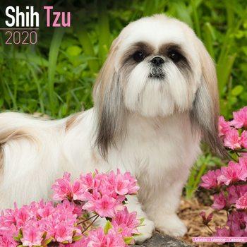 Calendário 2020  Shih Tzu