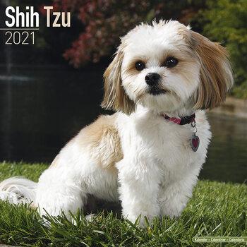 Calendário 2021 Shih Tzu