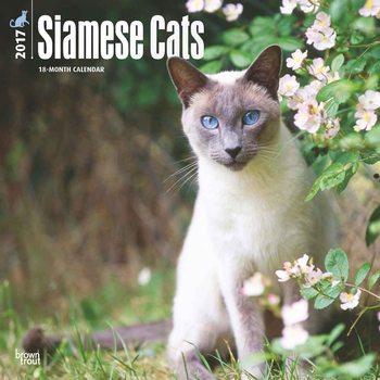 Calendário 2017 Siamese Cats
