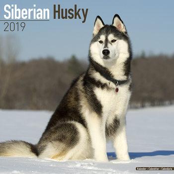 Calendário 2019  Siberian Husky