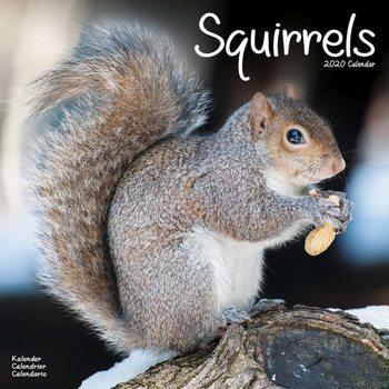 Calendário 2020  Squirrels