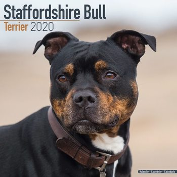 Calendário 2020  Staffordshire Bull Terrier