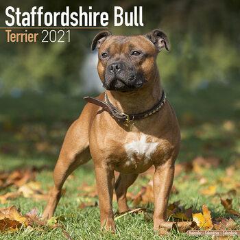 Calendário 2021 Staffordshire Bull Terrier