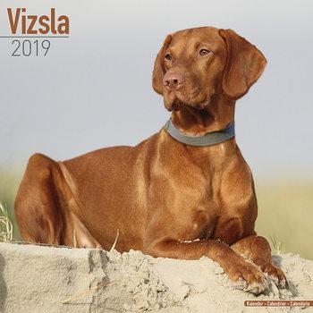 Calendário 2019  Vizsla