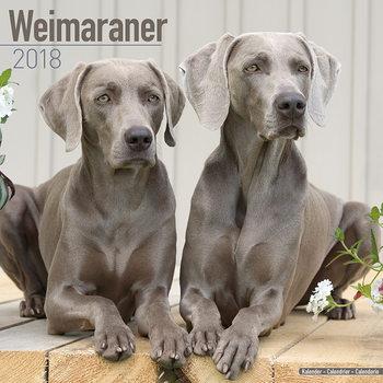 Calendário 2018 Weimaraner