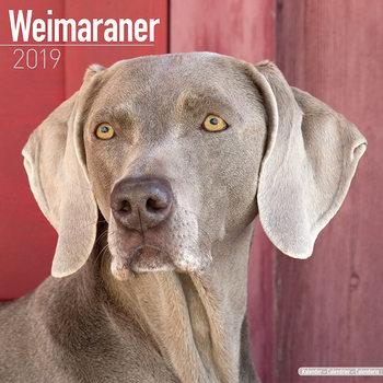 Calendário 2019  Weimaraner