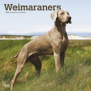 Calendário 2019  Weimaraners