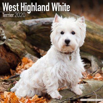 Calendário 2020  West Highland Terrier
