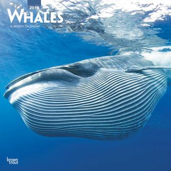 Calendário 2019  Whales