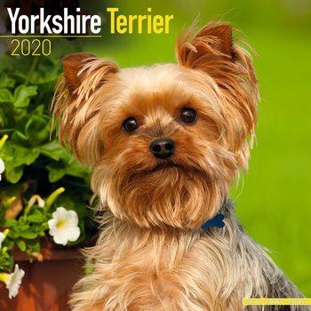 Calendário 2020  Yorkshire Terrier