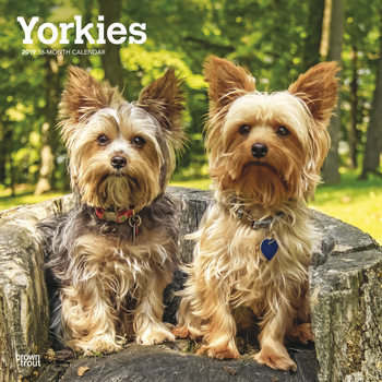 Calendário 2019  Yorkshire Terriers - International Edition