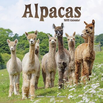 Calendário 2022 Alpacas