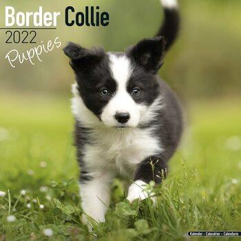 Calendário 2022 Border Collie - Pups