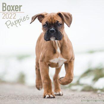 Calendário 2022 Boxer Pups