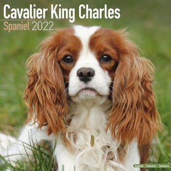 Calendário 2022 Cavalier King Charles