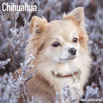 Calendário 2022 Chihuahua