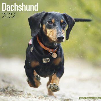 Calendário 2022 Dachshund