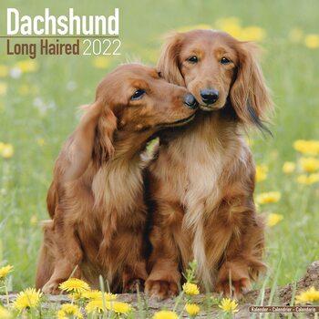 Calendário 2022 Dachsund