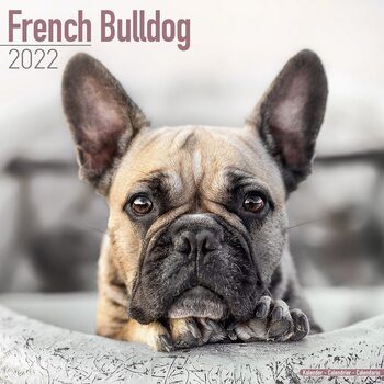 Calendário 2022 French Bulldog