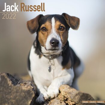 Calendário 2022 Jack Russell