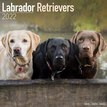 Calendário 2022 Labrador Ret - Mixed