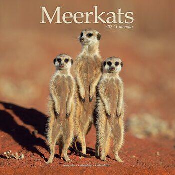 Calendário 2022 Meerkats