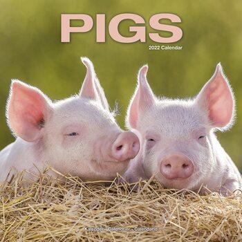 Calendário 2022 Pigs