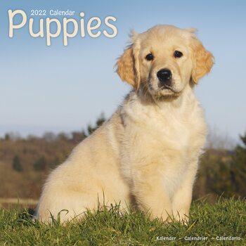 Calendário 2022 Pups