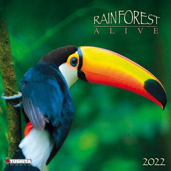 Calendário 2022 Rainforest Alive