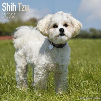Calendário 2022 Shih Tzu