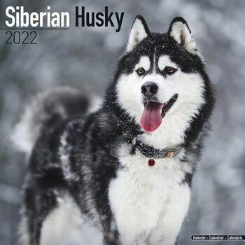 Calendário 2022 Siberian Husky