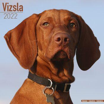 Calendário 2022 Vizsla