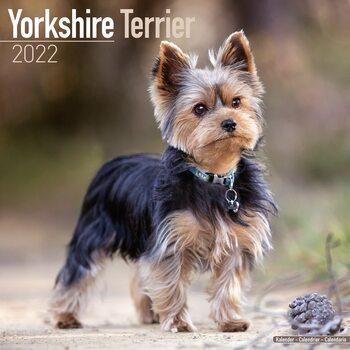 Calendário 2022 Yorkshire Terrier