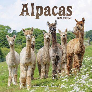 Calendar 2022 Alpacas