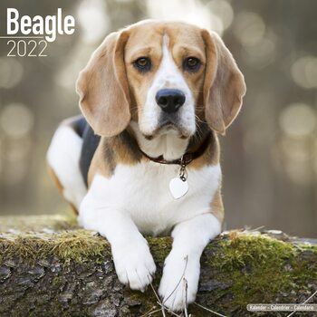 Calendar 2022 Beagle