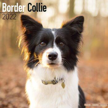Calendar 2022 Border Collie