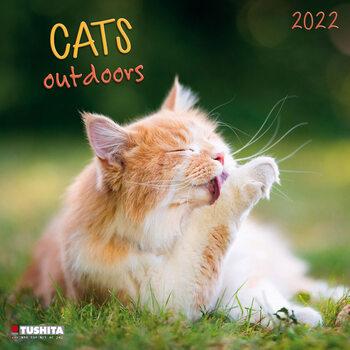 Calendar 2022 Cats Outdoors