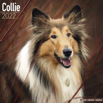 Calendar 2022 Collie