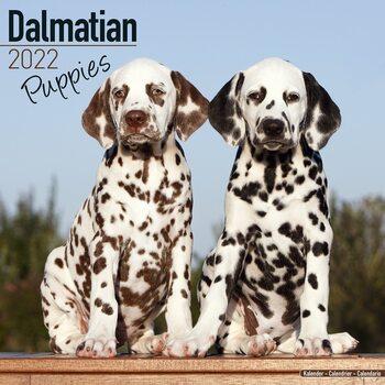 Calendar 2022 Dalmatian - Pups