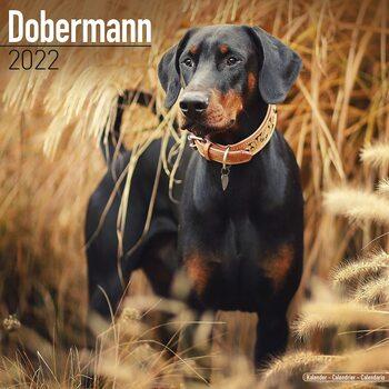 Calendar 2022 Dobermann
