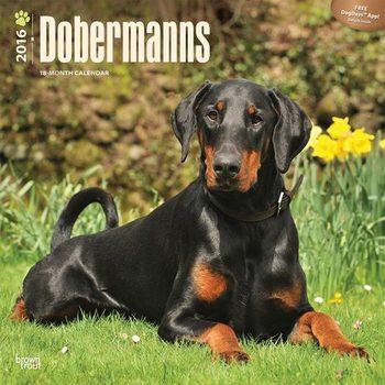 Calendar 2016 Dobermanns