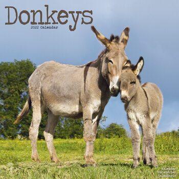 Calendar 2022 Donkeys