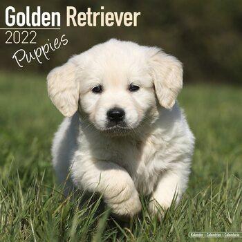 Calendar 2022 Golden Retriever - Pups