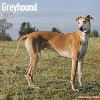 Calendar 2022 Greyhound