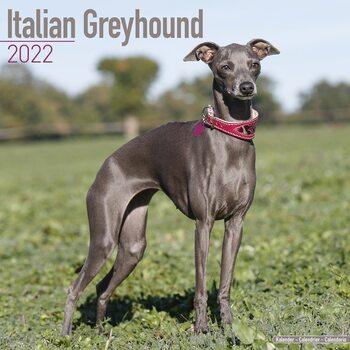 Calendar 2022 Italian Greyhound