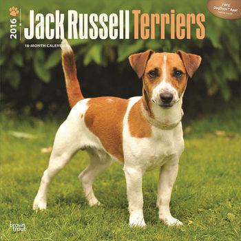 Calendar 2016 Jack Russell Terriers