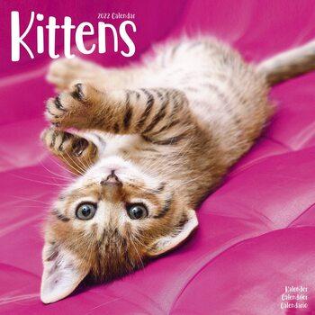 Calendar 2022 Kittens