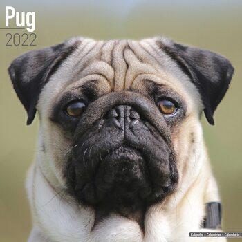 Calendar 2022 Pug