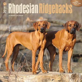 Calendar 2016 Rhodesian Ridgebacks