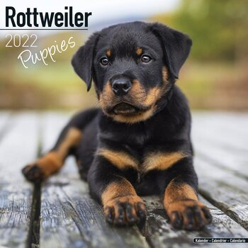 Calendar 2022 Rottweiler - Pups